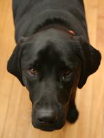 A Dog Running Milestone: Jack Breaks 20 Miles in a Week