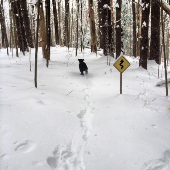 Jack showing off his snow running skills!